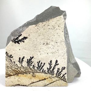Manganese Dendrites on Quartzite